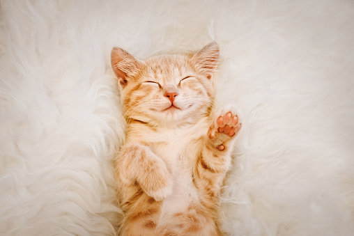 Cute, red kitten is sleeping on his back and smiling, paws up. Concept of sleep and good morning. 1144982182