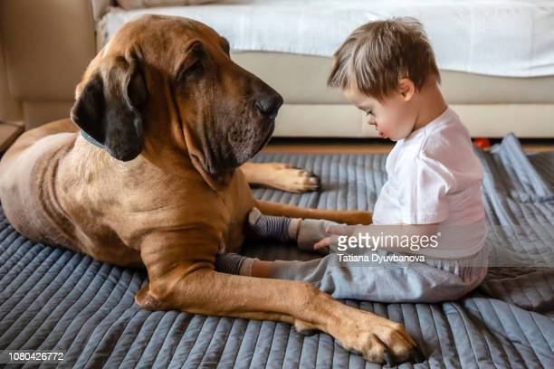 Cute small boy with Down syndrome playing with big dog of Fila Brasileiro breed
