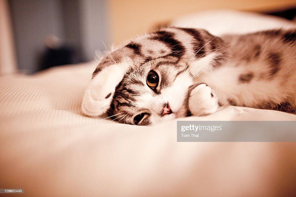 Cute small cat : Stock Photo