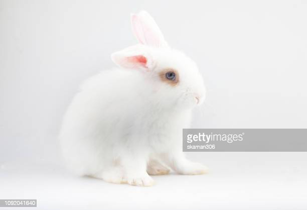 cute small rabbit on white background isolated - sport set competition round stock photos and pictures