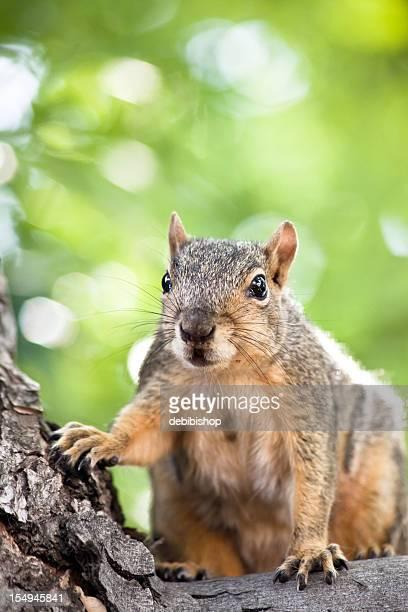 Cute Squirrel Closeup