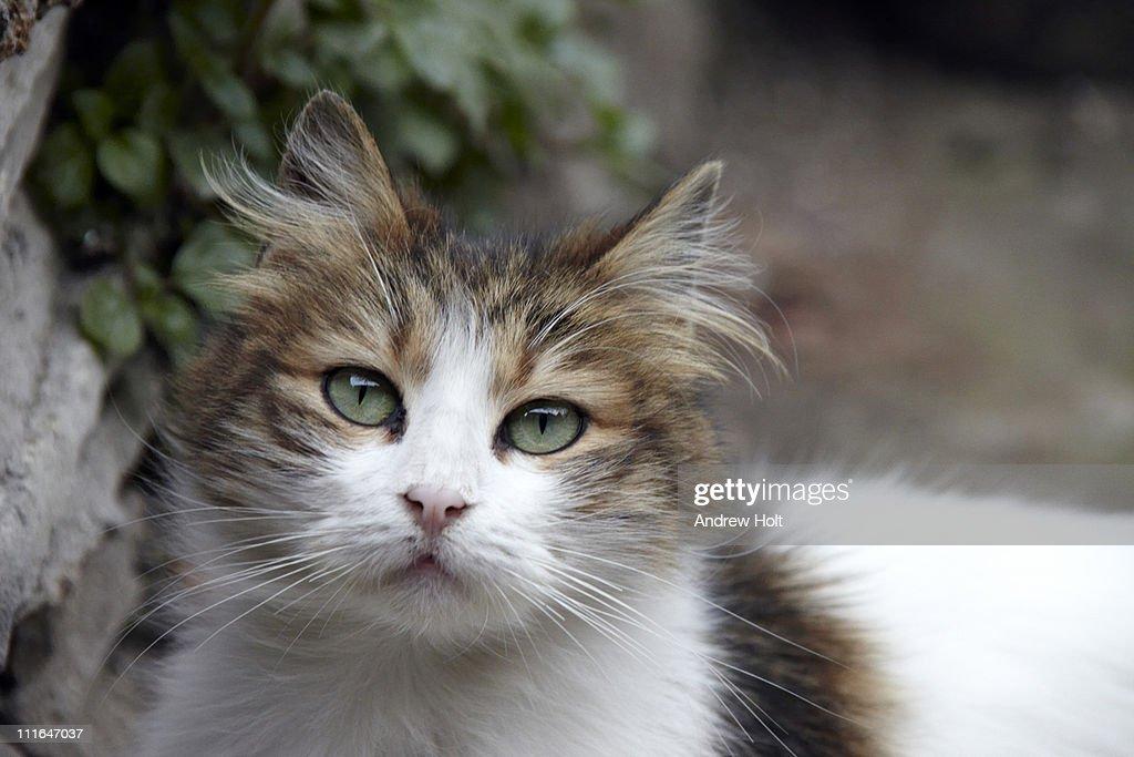 Cute stray cat in Istanbul, turkey : Stock Photo