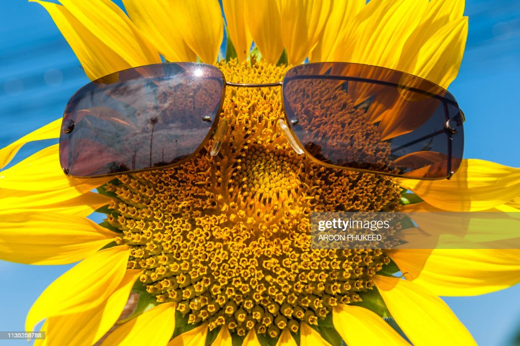 Cute sunflower ware glasses : Stock Photo
