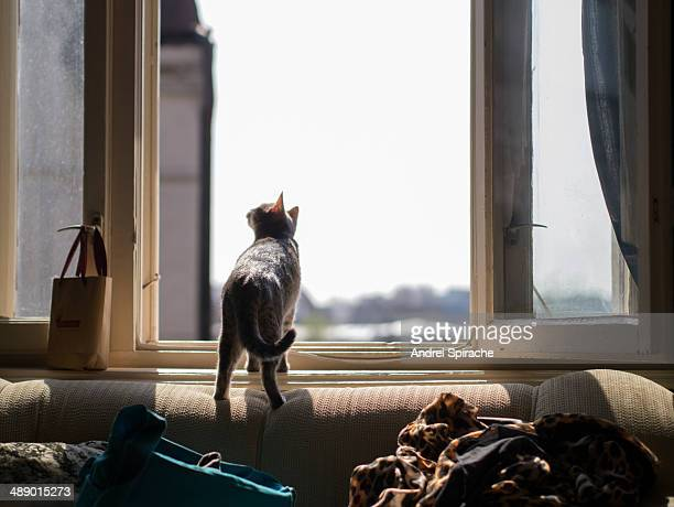 Cute tabby cat looking out the window