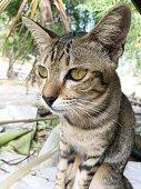 close up cute tabby cat
