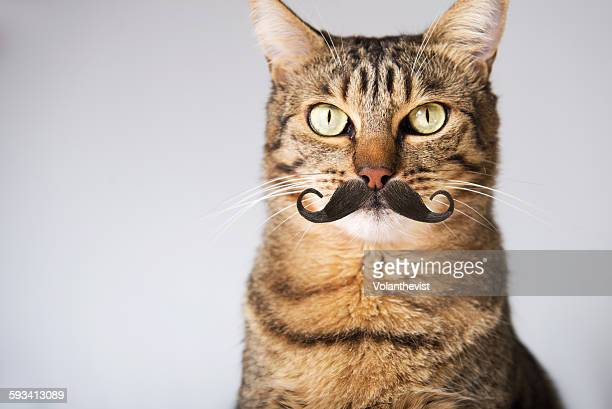 cute tabby cat with hipster moustache - dierenkop stockfoto's en -beelden