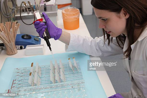 cute technician at work in laboratory of a blood bank - blood bank stock photos and pictures