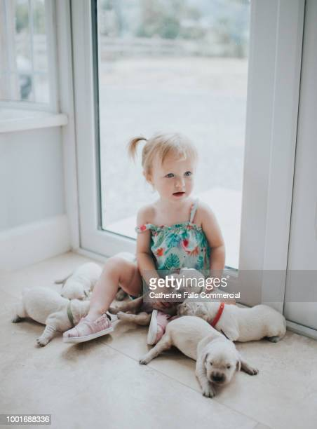 Cute Toddler girl with Golden Retriever Puppies