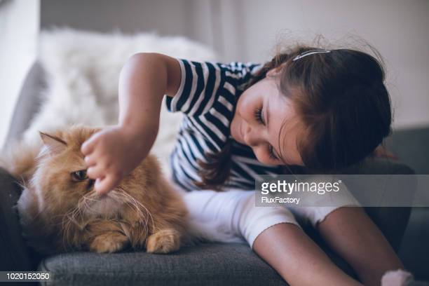 cute toddler having fun with a persian cat - hairy girl stock pictures, royalty-free photos & images