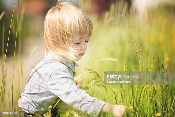 Cute Toddler picking Flower in tall Grass