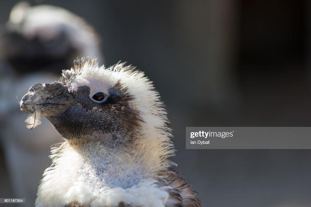 in den mund vögeln
