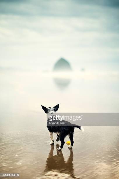 Mignon chiot chien Wet de Cannon Beach