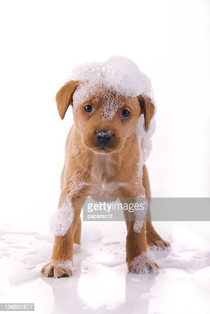 cute, wet puppy - wet stock pictures, royalty-free photos & images