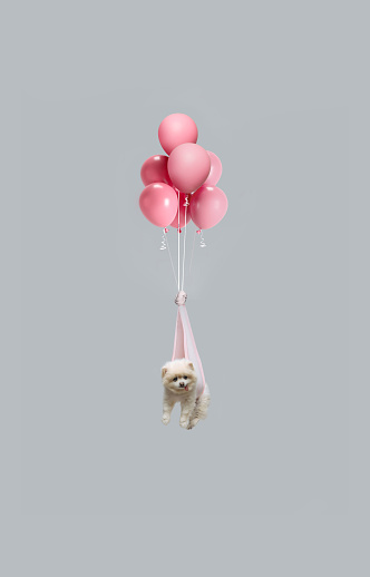 Cute white dog floating with balloons - gettyimageskorea