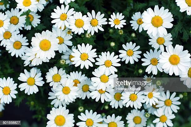 Cute white flowers (overlook)