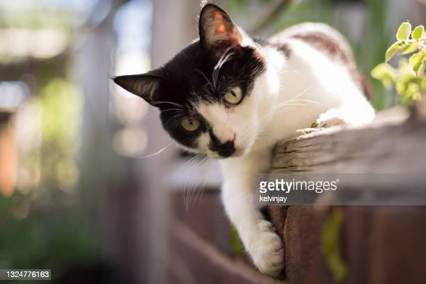 cute young cat playing in a garden - domestic cat stock pictures, royalty-free photos & images