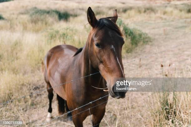 cute young horse, standing near paddock fence - um animal - fotografias e filmes do acervo