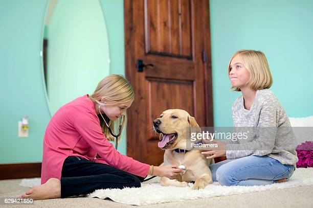 Cute young sisters playing veterinarian at home with their labrador