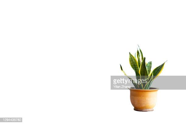 a cut-out potted plant with white background - changzhou stock pictures, royalty-free photos & images