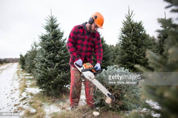 Cutter Ryan Tyce is the operations manager for Somerville Nurseries Inc in Alliston Ontario The company has been growing Christmas trees since 1950...