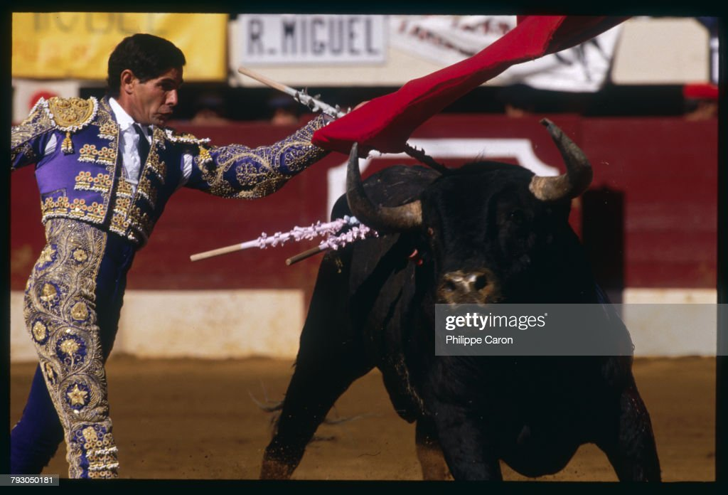 Cutting a dashing figure in his rich violet costume trimmed with gold Spanish matador Miguel  sc 1 st  Getty Images & Bull Fighting Pictures | Getty Images