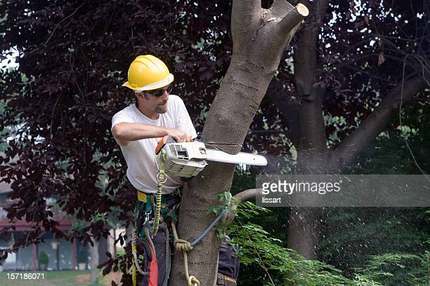 Cutting a V in the Cherry Tree