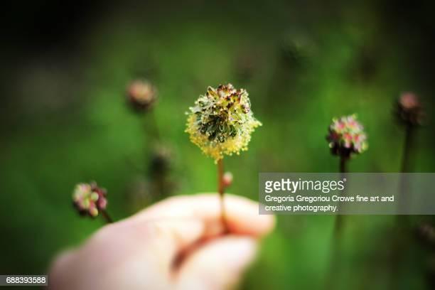 cutting flowers - gregoria gregoriou crowe fine art and creative photography 個照片及圖片檔