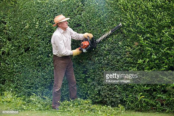 Cutting garden hedge with a petrol hedge cutter