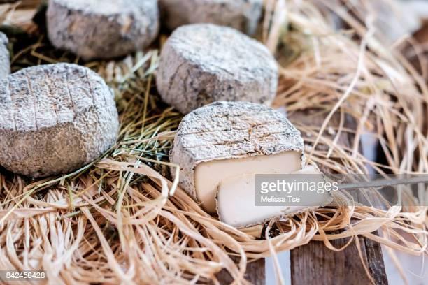 cutting into goat cheese - cuisine française photos et images de collection