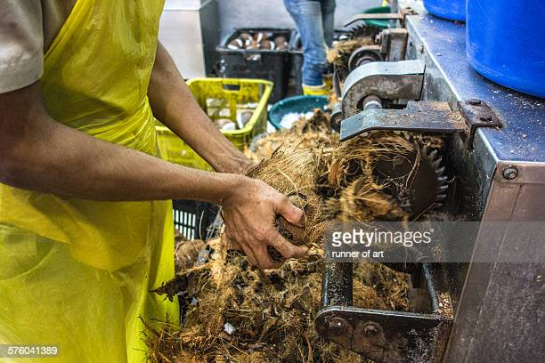 Cutting the coconut using machine