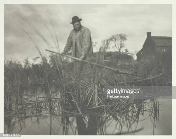 Cutting the Gladdon, 1886. A work made of platinum print, pl. Xxxii from the album 'life and landscape on the norfolk broads' ; edition of 200....