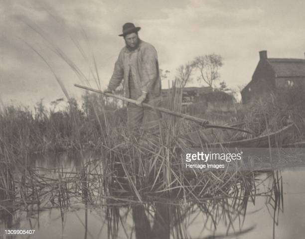 Cutting the Gladdon, 1886. Artist Dr Peter Henry Emerson, Thomas Frederick Goodall. .