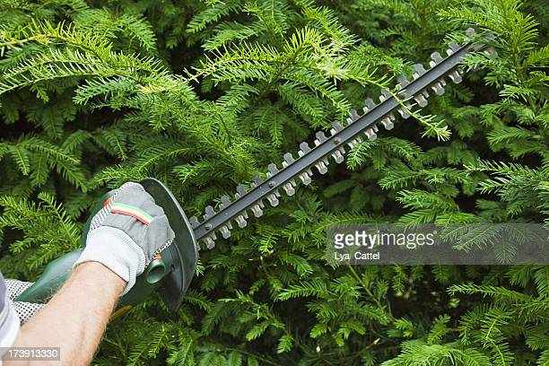 Cutting the trees # 7 XXXL