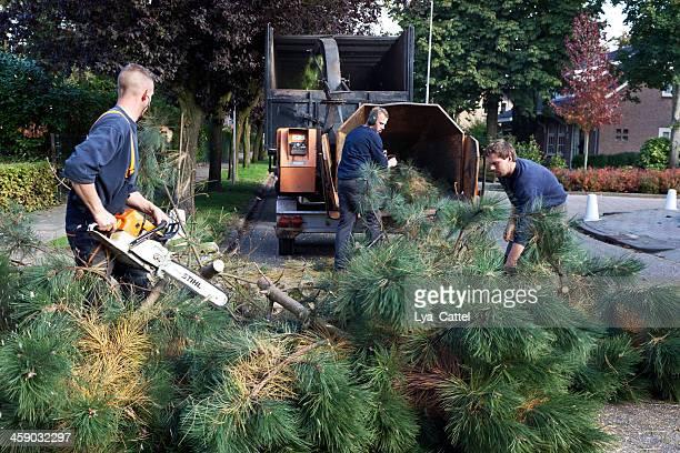 Cutting trees # 14 XXL
