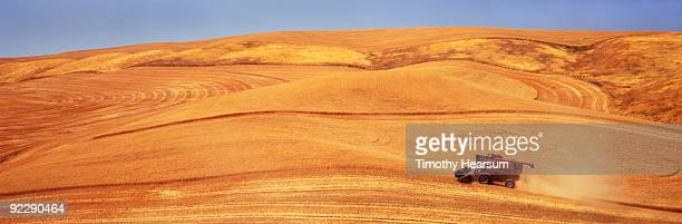 cutting wheat  on hillside - timothy hearsum stock photos and pictures