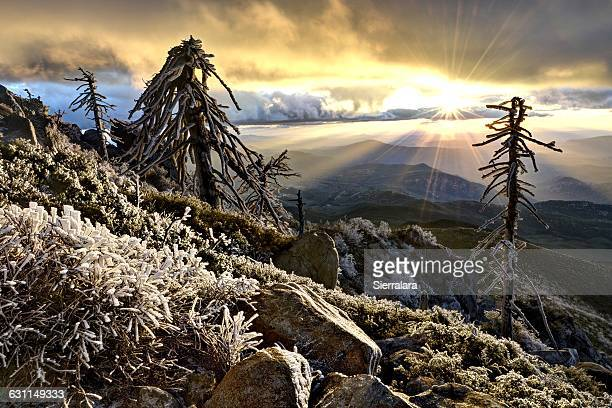 cuyamaca rancho state park at sunset, california, america, usa - state park stock pictures, royalty-free photos & images