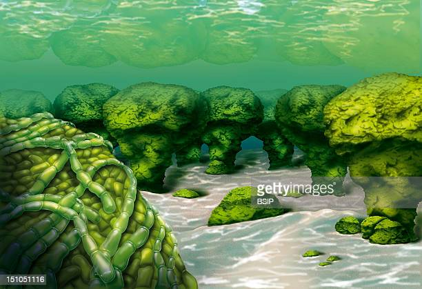 Cyanobacteria And Stromatolites Illustration Of A Sea Bed With Stromatolites Lithified Sedimentary Structures Made Up Of Cyanobacterial Debris Formed...