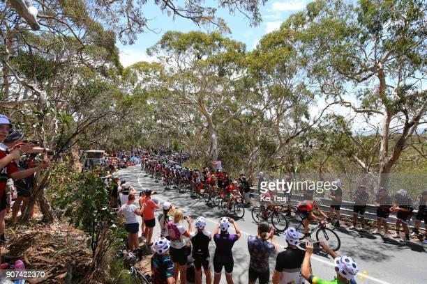 20th Santos Tour Down Under 2018 / Stage 5 Peloton / Landscape / Main Road, McLaren Vale - Brookman Road, Willunga Hill 382m / Men / TDU /