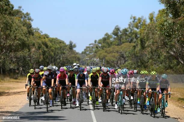 4th Cadel Evans Great Ocean Road Race 2018 / Women Peloton / Geelong Waterfront Geelong Waterfront / Women / Deakin University /