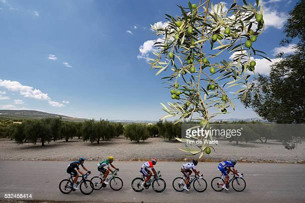 68th Tour of Spain 2013 / Stage 9 Illustration Illustratie / Olive Tree Arbre OlijfBoom / Landscape Paysage Landschap / ROUX Anthony / MONDORY Lloyd...