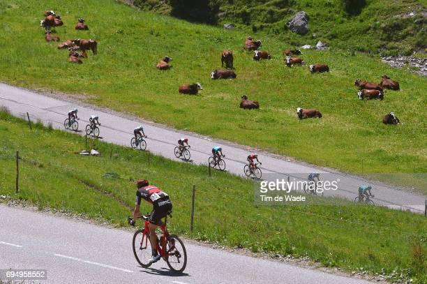 69th Criterium du Dauphine 2017 / Stage 8 Kilian FRANKINY / Peloton / Landscape / Cow/ Albertville Plateau de Solaison 1508m /