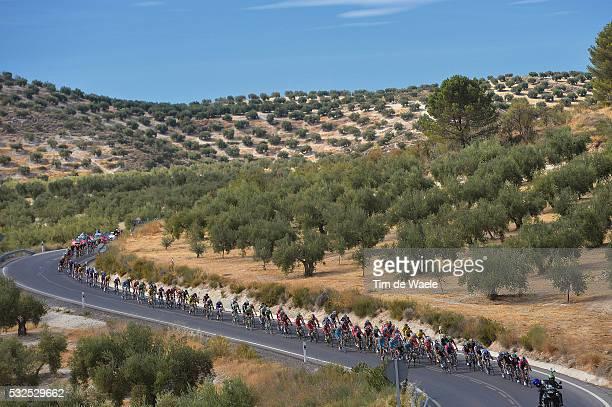 69th Tour of Spain 2014 / Stage 7 Illustration Illustratie / Peleton Peloton / Olive Tree Arbres Olijfbomen / Landscape Paysage Landschap / Alhendin...