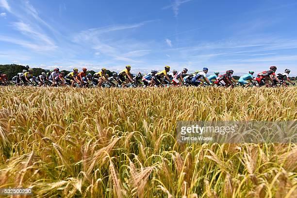 79th Tour of Swiss 2015 / Stage 7 Illustration Illustratie/ Peloton Peleton/ Landscape Paysage/ Wheat/ Biel/Bienne - Dudingen / Tour de Suisse Ronde...