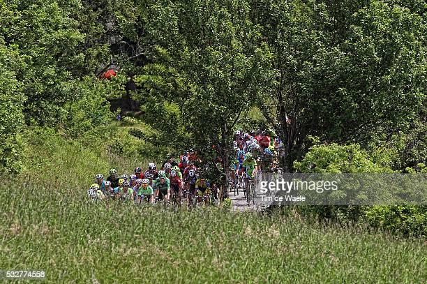 97th Tour of Italy 2014 / Stage 11 Illustration Illustratie / Peleton Peloton / Forest Bois Bos / Landscape Paysage Landschap / Collecchio Savona /...