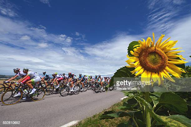 99th Tour de France 2012 / Stage 12 Illustration Illustratie / Peleton Peloton / Sun Flowers Tournesoles Zonnebloemen / Landscape Paysage Landschap /...