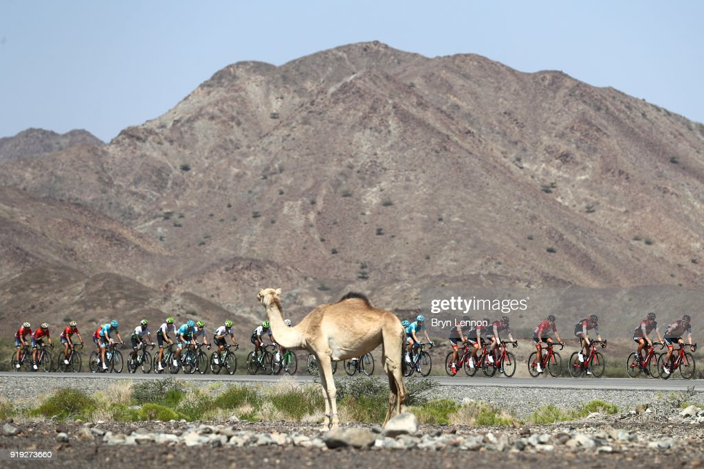 Cycling: 9th Tour of Oman 2018 / Stage 5 : ニュース写真