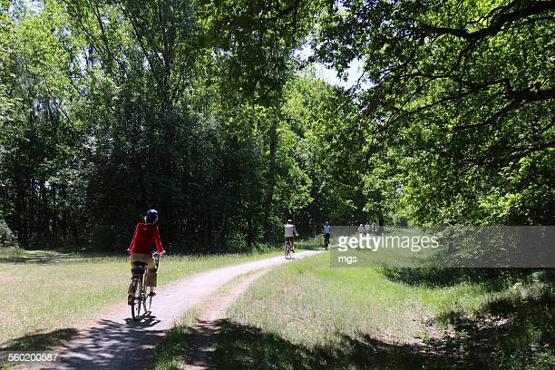 cycling at spreewald - spreewald stock pictures, royalty-free photos & images