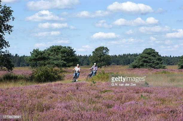 cycling in beautiful drenthe - drenthe stock pictures, royalty-free photos & images