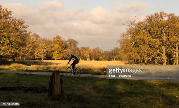 cycling in richmond park - リッチモンド公園 ストックフォトと画像
