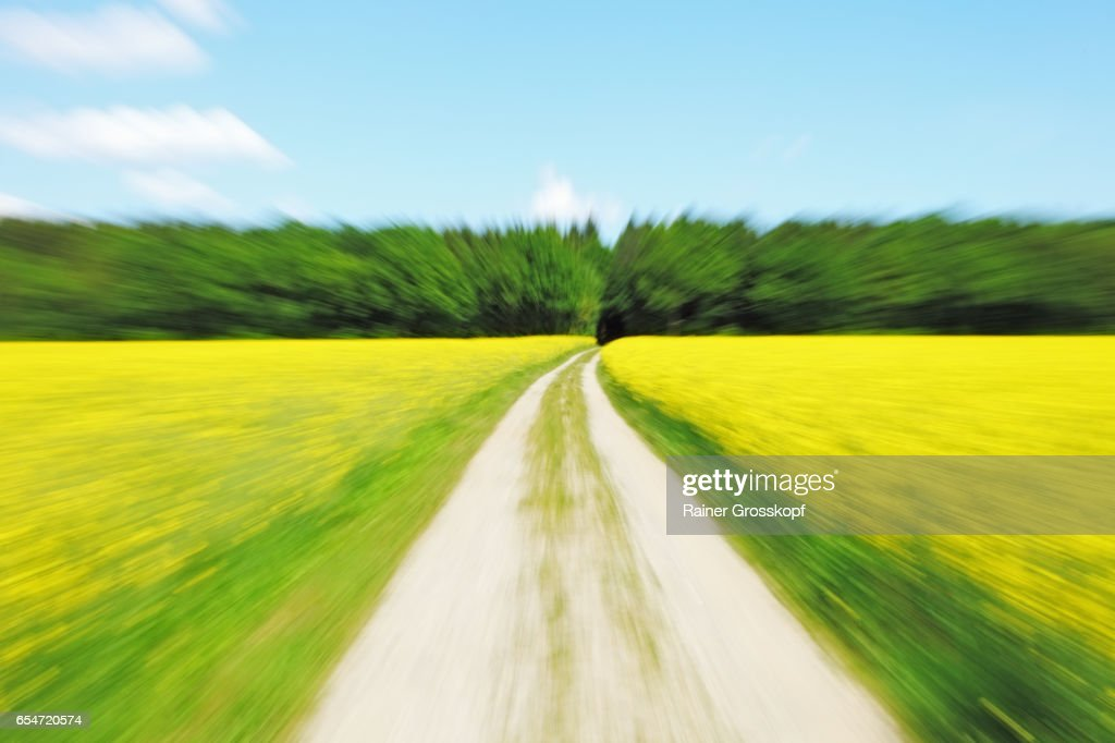 Cycling through rape fields (blurred) : Stock-Foto